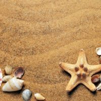 ビーチコーミング貝殻の画像