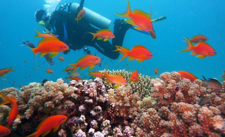 ダイビングー海中の画像