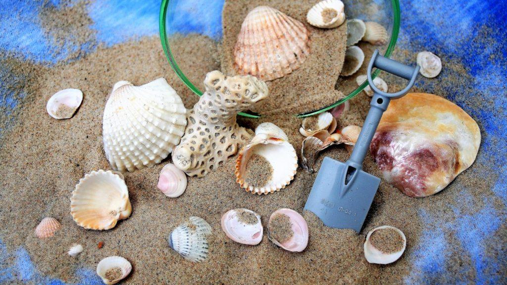 ビーチコーミング 貝殻
