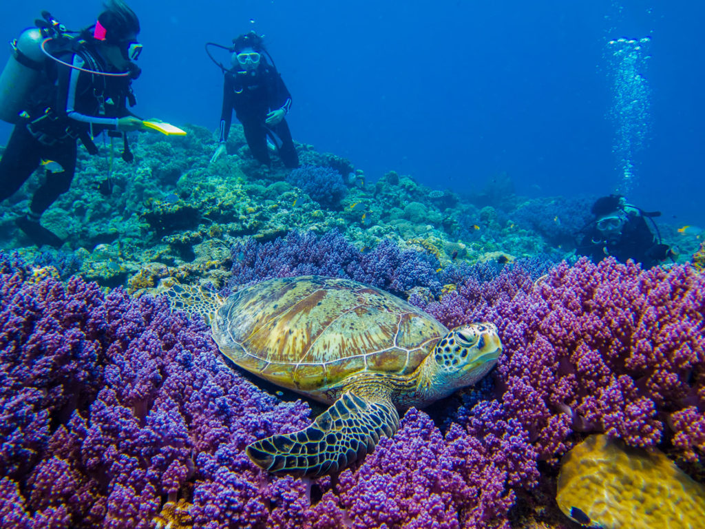 沖縄本島で人気のダイビングスポット 慶良間諸島