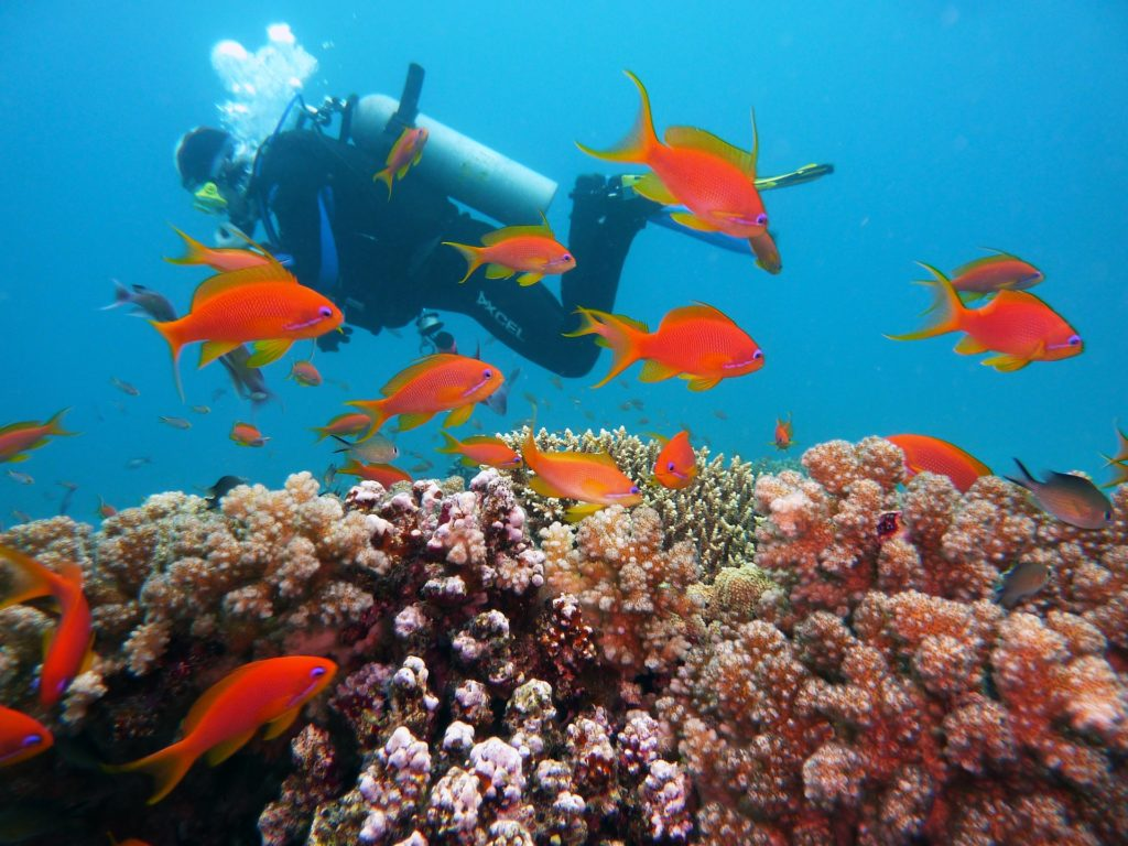 ダイビング アクションカメラ