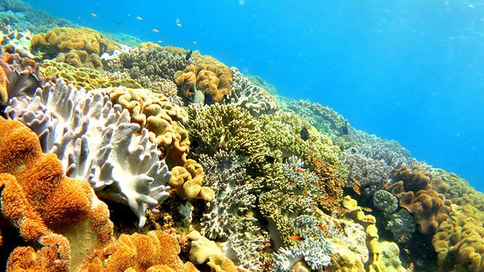 沖縄本島で人気のダイビングスポット 北谷海底遺跡/砂辺