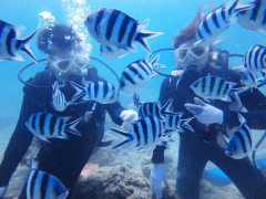 沖縄本島で人気のダイビングスポット 瀬底島