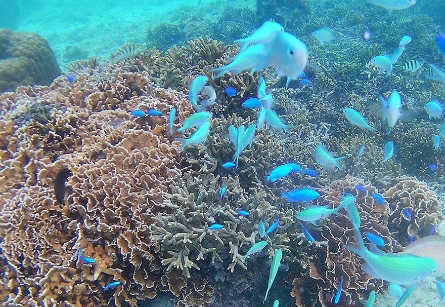 沖縄本島で人気のダイビングスポット