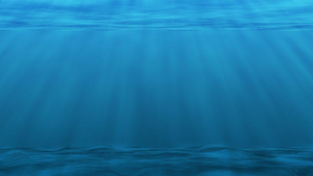 沖縄の海 プランクトン