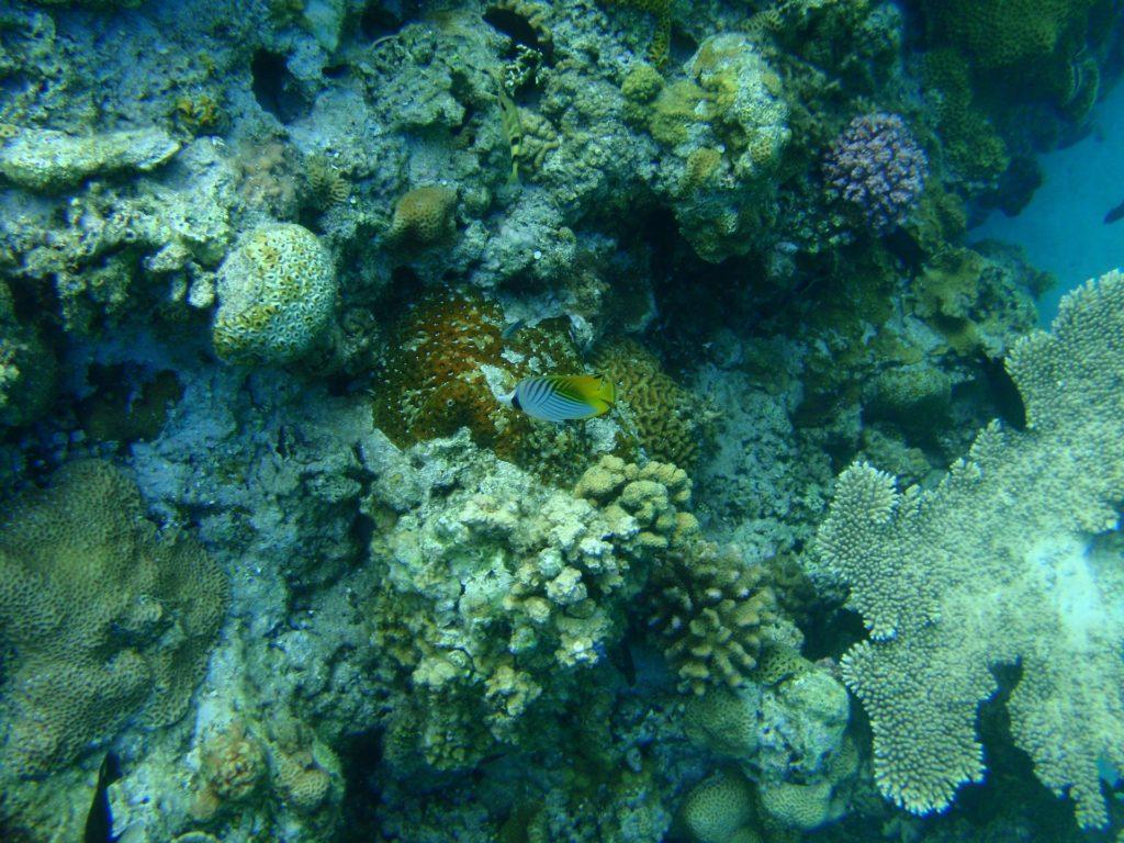 沖縄の海のサンゴ礁