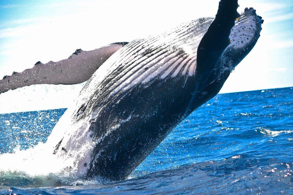 どうしてクジラはあんなに大きいのか