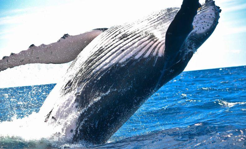 そうだったの!?聞いてビックリ、「クジラ」のトリビア10選