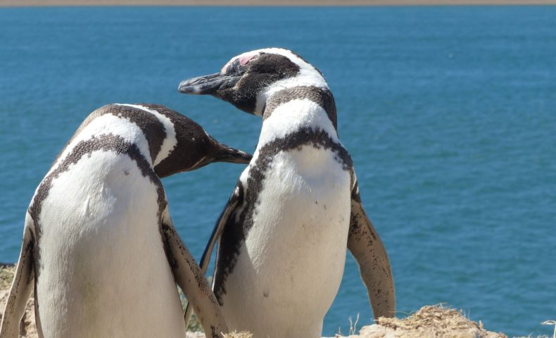 あなたが知らない『ペンギンの世界』!ペンギンのトリビア7選