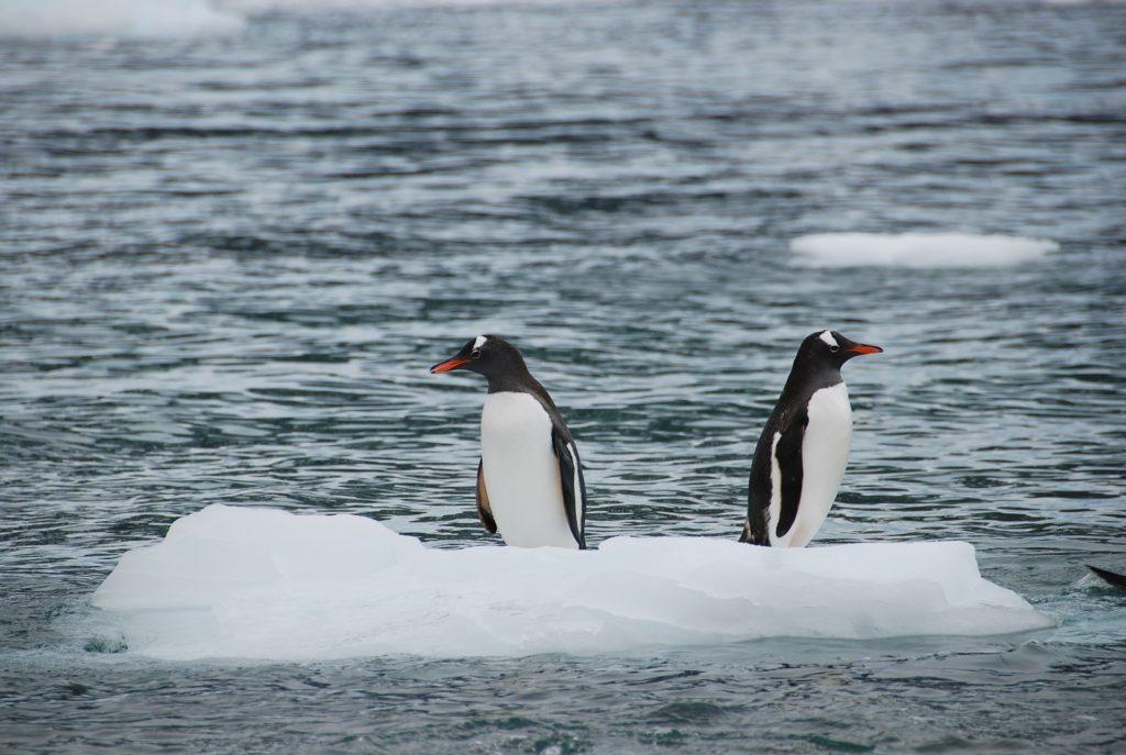 ペンギンは何故北極にはいないのか
