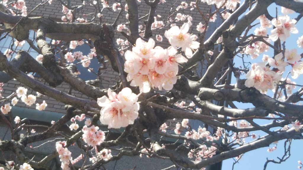 春の近江町市場