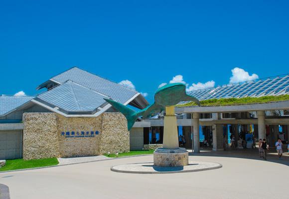 ジンベエザメ 美ら海水族館